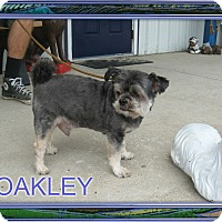 Adopt A Pet :: OAKLEY - Port Clinton, OH
