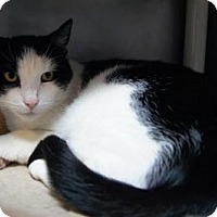 Adopt A Pet :: Silas - New Milford, CT