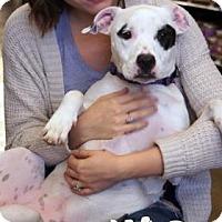 Adopt A Pet :: Elvira - Newport, KY