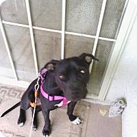 Adopt A Pet :: Little Bit - Las Vegas, NV