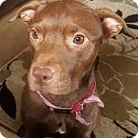 Adopt A Pet :: Mila - Dayton, OH