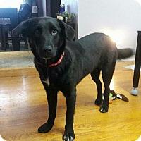 Adopt A Pet :: Samantha - Milwaukee, WI