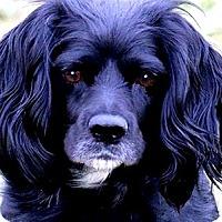 Adopt A Pet :: APPALEE(WHAT A STORY--PLS READ - Wakefield, RI