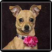 Adopt A Pet :: Allie - Fort Braff, CA