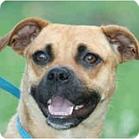 Adopt A Pet :: Mandy - kennebunkport, ME