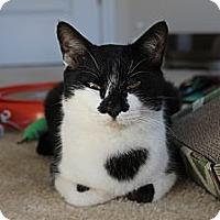 Adopt A Pet :: Mookie - Monroe, NC