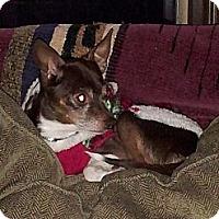 Adopt A Pet :: Weasle - Puyallup, WA