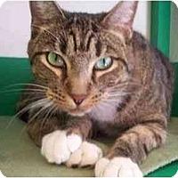 Adopt A Pet :: Outlaw - El Cajon, CA