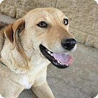 Adopt A Pet :: Betty - Stilwell, OK