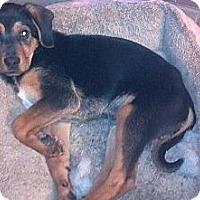 Adopt A Pet :: Bullet - Hazard, KY