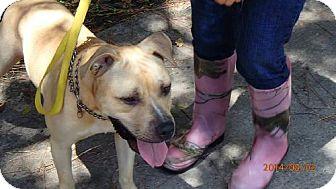 Labrador Retriever Dog for adoption in Oviedo, Florida - TOUCHE