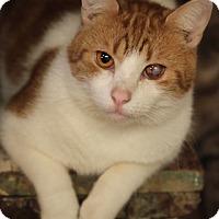 Adopt A Pet :: McNulty - Bronx, NY
