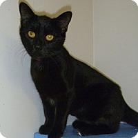 Adopt A Pet :: Halston - Hamburg, NY