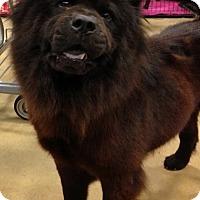 Adopt A Pet :: Kiera - Gainesville, FL
