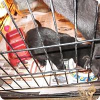 Adopt A Pet :: Cutie Pie - Delmont, PA