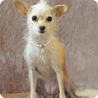 Adopt A Pet :: Jeannie - Henderson, NV