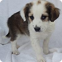 Adopt A Pet :: Birdie (6 lb) - SUSSEX, NJ