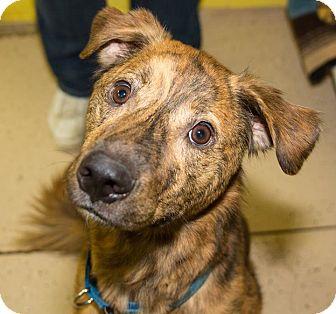Dog Training Seville Ohio