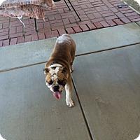 Adopt A Pet :: Monkey - Santa Ana, CA