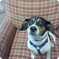 Adopt A Pet :: Nellie - Dumfries, VA