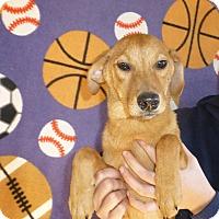 Adopt A Pet :: Melody - Oviedo, FL