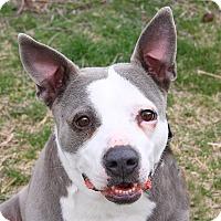 Adopt A Pet :: Milky Way - Oak Ridge, NJ