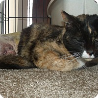 Adopt A Pet :: WHISKERS - Acme, PA