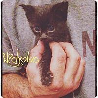 Adopt A Pet :: Nicholas - Flushing, NY