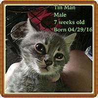Adopt A Pet :: Tin Man - Bayville, NJ