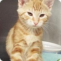 Adopt A Pet :: Nala - Grants Pass, OR