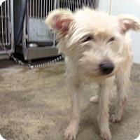Adopt A Pet :: FUZZY - Upper Sandusky, OH