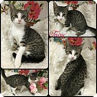Adopt A Pet :: Fairy - Joliet, IL