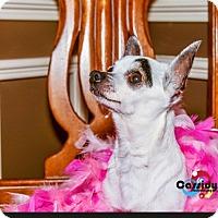 Adopt A Pet :: Zelos - Matthews, NC