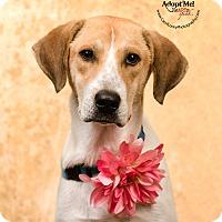 Adopt A Pet :: Cass - Cincinnati, OH