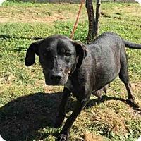 Adopt A Pet :: A009596 - Rosenberg, TX