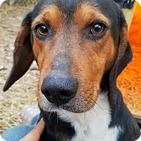 Adopt A Pet :: Earl - Kingston, TN