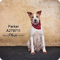 Pointer Mix Dog for adoption in Conroe, Texas - PARKER