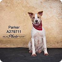 Adopt A Pet :: PARKER - Conroe, TX