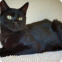 Adopt A Pet :: Osiris - Fredericksburg, TX