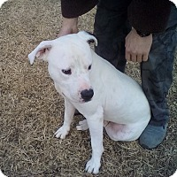 Adopt A Pet :: Angus - Southington, CT