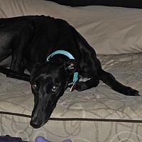 Adopt A Pet :: Adele - Lexington, SC
