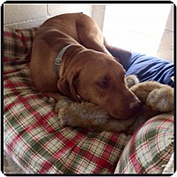 Adopt A Pet :: Whyatt - Garber, OK