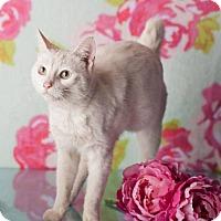 Adopt A Pet :: Bobbie - Glendale, AZ