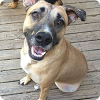 Adopt A Pet :: Annie - Olive Branch, MS