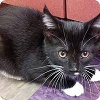 Adopt A Pet :: Monroe - Calumet City, IL