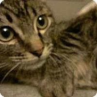 Adopt A Pet :: Sampson - San Diego, CA