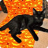 Adopt A Pet :: Coal *REDUCED FEE* - San Diego, CA