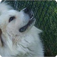 Adopt A Pet :: Midori - Seymour, CT