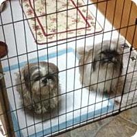 Adopt A Pet :: Marley - Hazard, KY