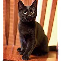 Adopt A Pet :: Penny - Owensboro, KY